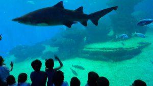 EI_palma aquarium 7
