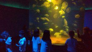 EI_palma aquarium 9